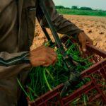Apoyos en proyectos productivos para excombatientes en el Huila