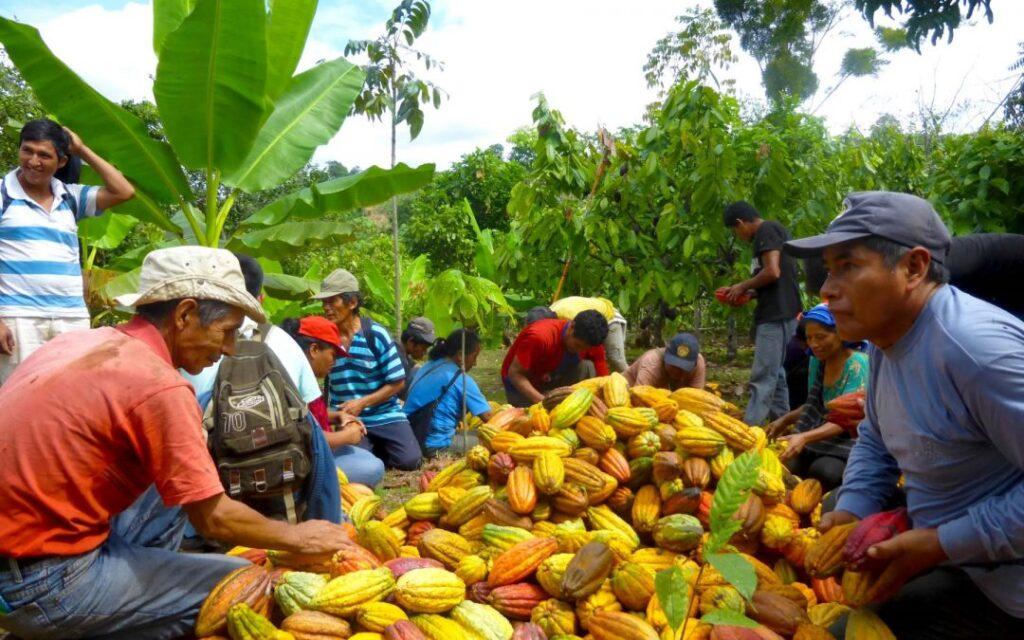 Millonaria inversión dirigida a mejorar la producción de cacao en el Huila. - Noticias de Colombia